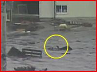 こんな映像あったんだ・・・。津波に流されながらも必死に泳いでいる人の映像