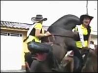 パレード中の馬が突然暴れだし、乗っていたお姉さんが地面に叩きつけられる