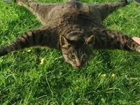 なにそれコワイ。ペットのネコが死んじゃったからラジコンに改造した動画。