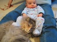 赤ちゃんにボコボコにされるが文句一つ言わないニャンコさん。カワイイ動画
