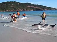 ビーチに座礁したイルカの群れを救った人たち。たまたま人がいて良かったね