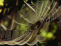 蜘蛛がクモの網を張る様子が良く分かるYouTube動画。これは凄いなあ。