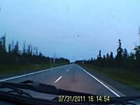 大きな野生動物との衝突の瞬間ドライブレコーダー。止まれば良かったのに。