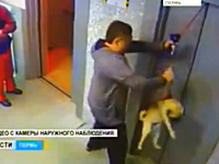 エレベーターで首つり状態になりかけたワンコを助けたお兄さんがGJすぎる。