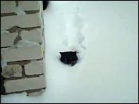深く積もった雪の中を潜水しているように進むニャンコが可愛い動画www