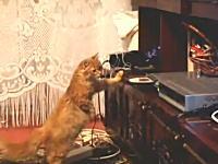 なんだ!?こいつ動くぞ・・・。CDプレイヤーのトレイに興味津々なニャンコ