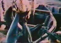 日本のイルカ漁を批判する海外の番組:超ショッキング映像注意