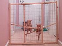 わんぱくな子猫。必死に脱出を図る2匹の子猫が可愛すぎて惚れてまうやろ