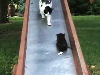 ワンパクな子猫たちの世話で大忙しなママ猫 なぜそこを住処に選んだw