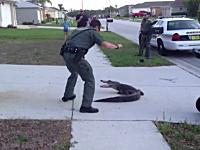住宅街に現れたワニを素手で捕まえる保安官が慣れすぎwww専門家かよw