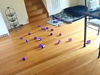 ニャンコを使ってボーリングwレーザーポインターに釣られた猫がストライク!